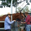 Some Indications of Equine Dental Problems