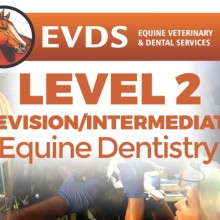 Level 2 Equine Dentistry - Revision / Intermediate