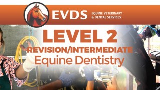 Level 2 Equine Dentistry - Intermediate