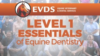 Level 1 Essentials of Equine Dentistry