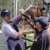 Dental care is an important part of equine health.