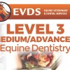 Level 3 Equine Dentistry - Intermediate / Advanced