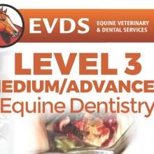 Level 3 Equine Dentistry - Intermediate/Advanced