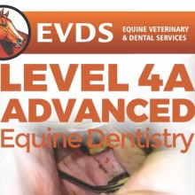 Level 4 Equine Dentistry - Advanced